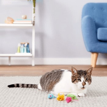 Hartz Just For Cats Kitty Frenzy Cat Toy with Catnip