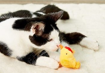 Multipet Look Who's Talking Chicken Plush Cat Toy with Catnip