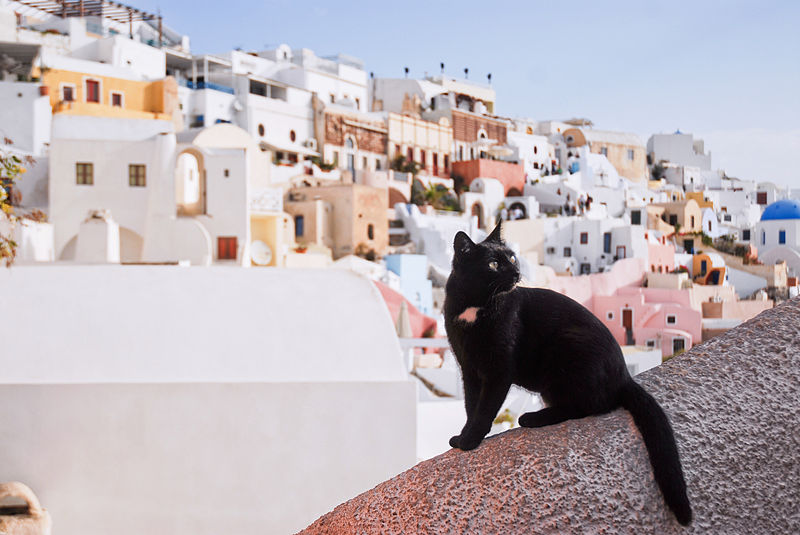 Santorini black cat