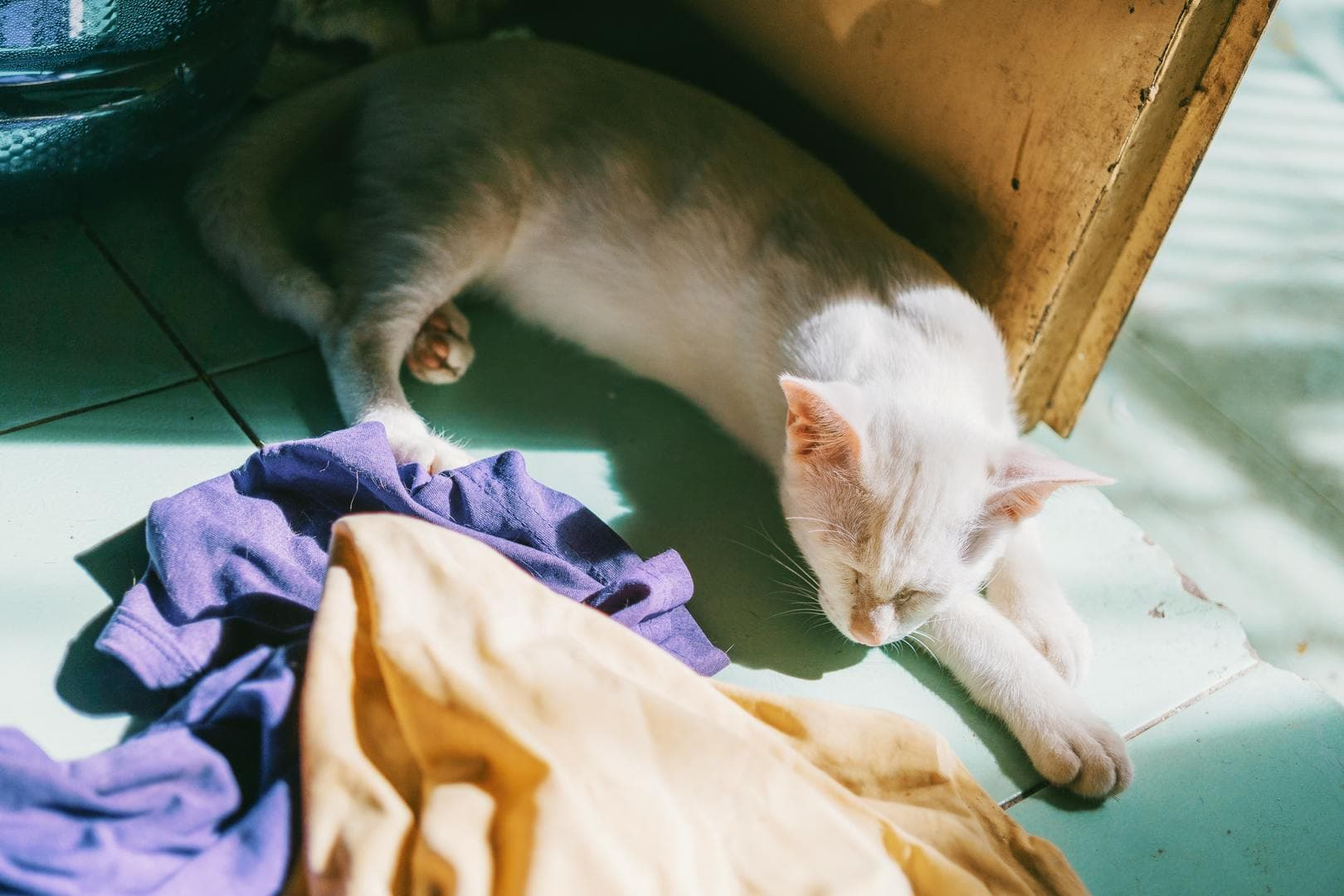 cat on the floor with clothes