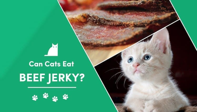 can cats eat beef jerky?