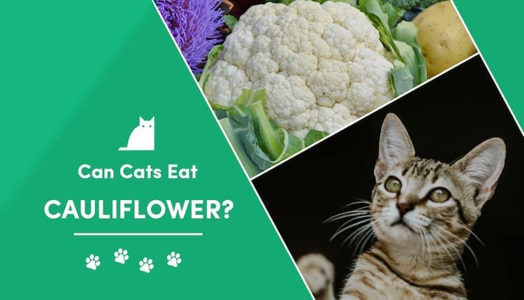 can cat eat Cauliflower