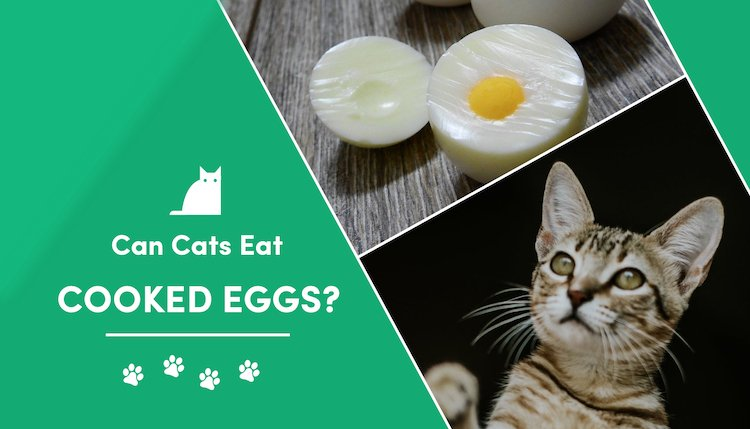 can cats eat cooked eggs