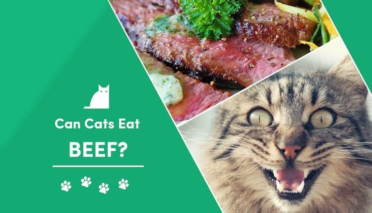 can cats eat beef?