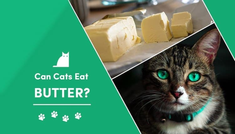 can cats eat butter?