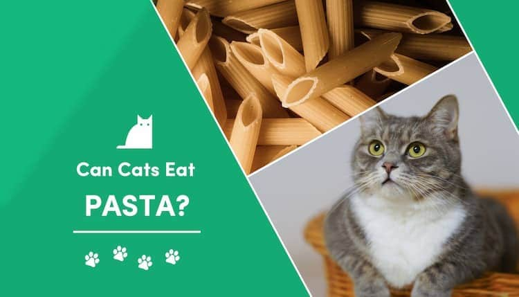 can cats eat pasta?