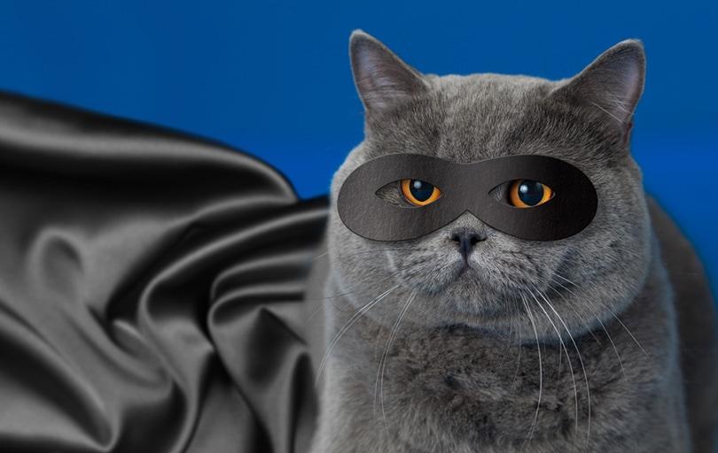 cat in superhero mask