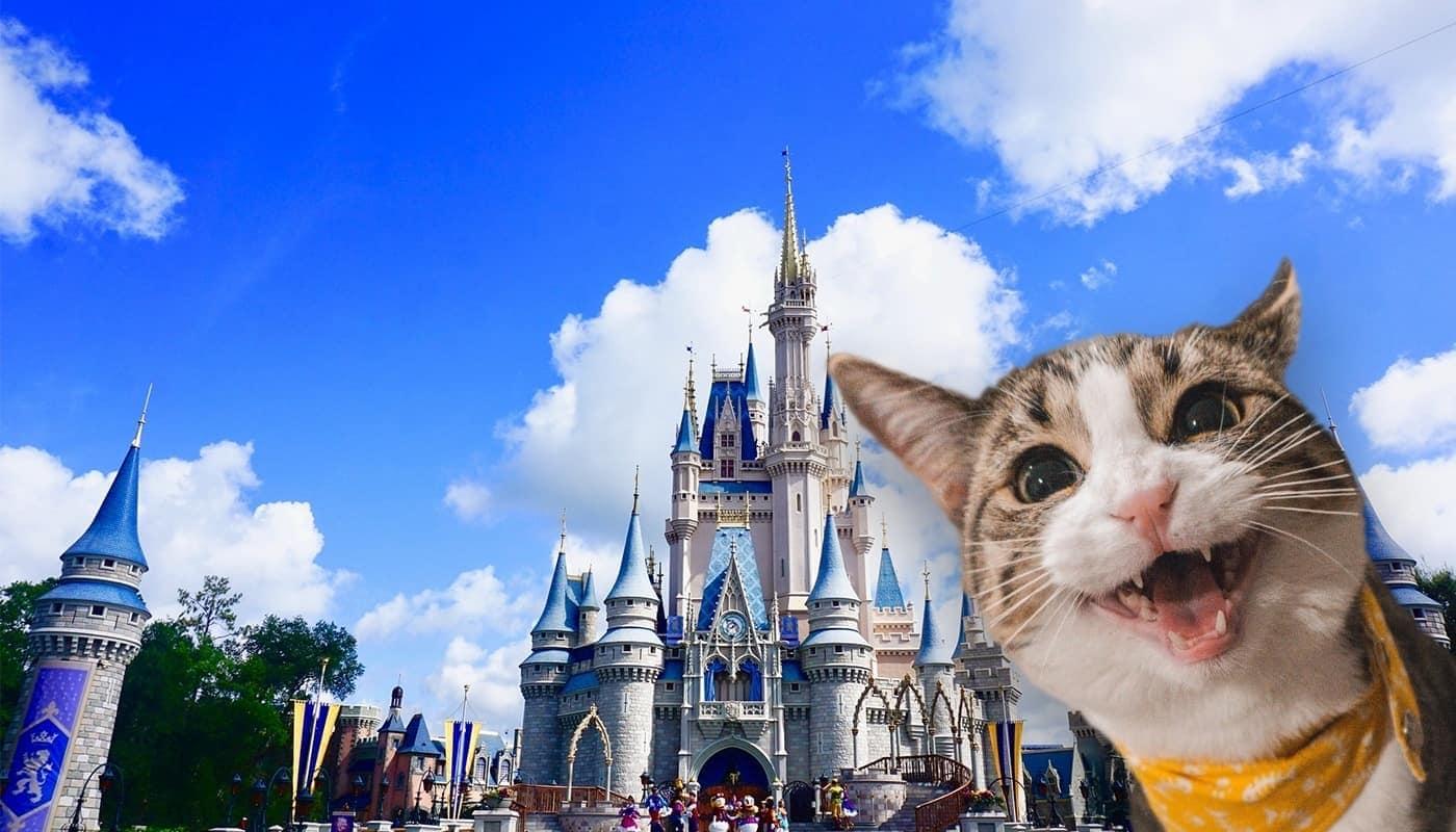 Disney Cat
