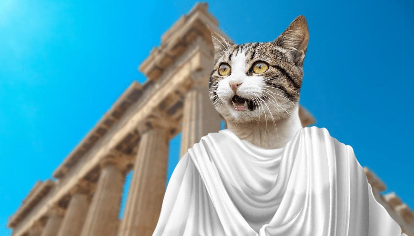 Greek cat in Colosseum