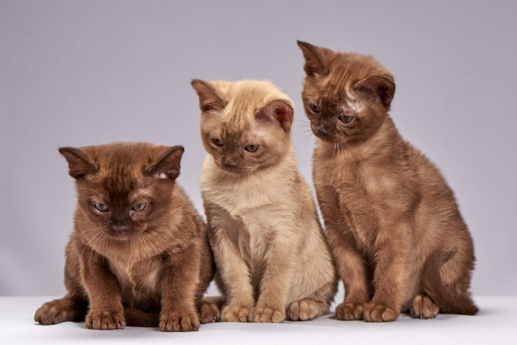 group of brown kitten_pxfuel_DMCA