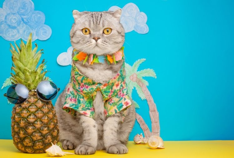 hawaiian cat with pineapple