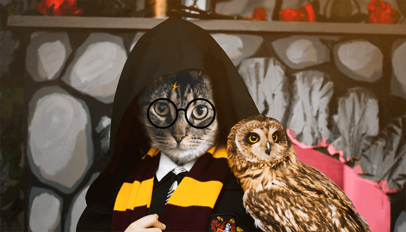 potter cat with owl