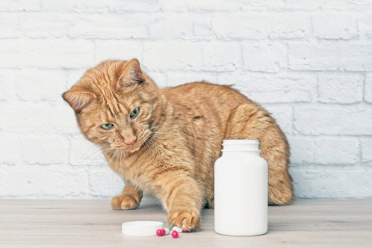 cat with pill bottle