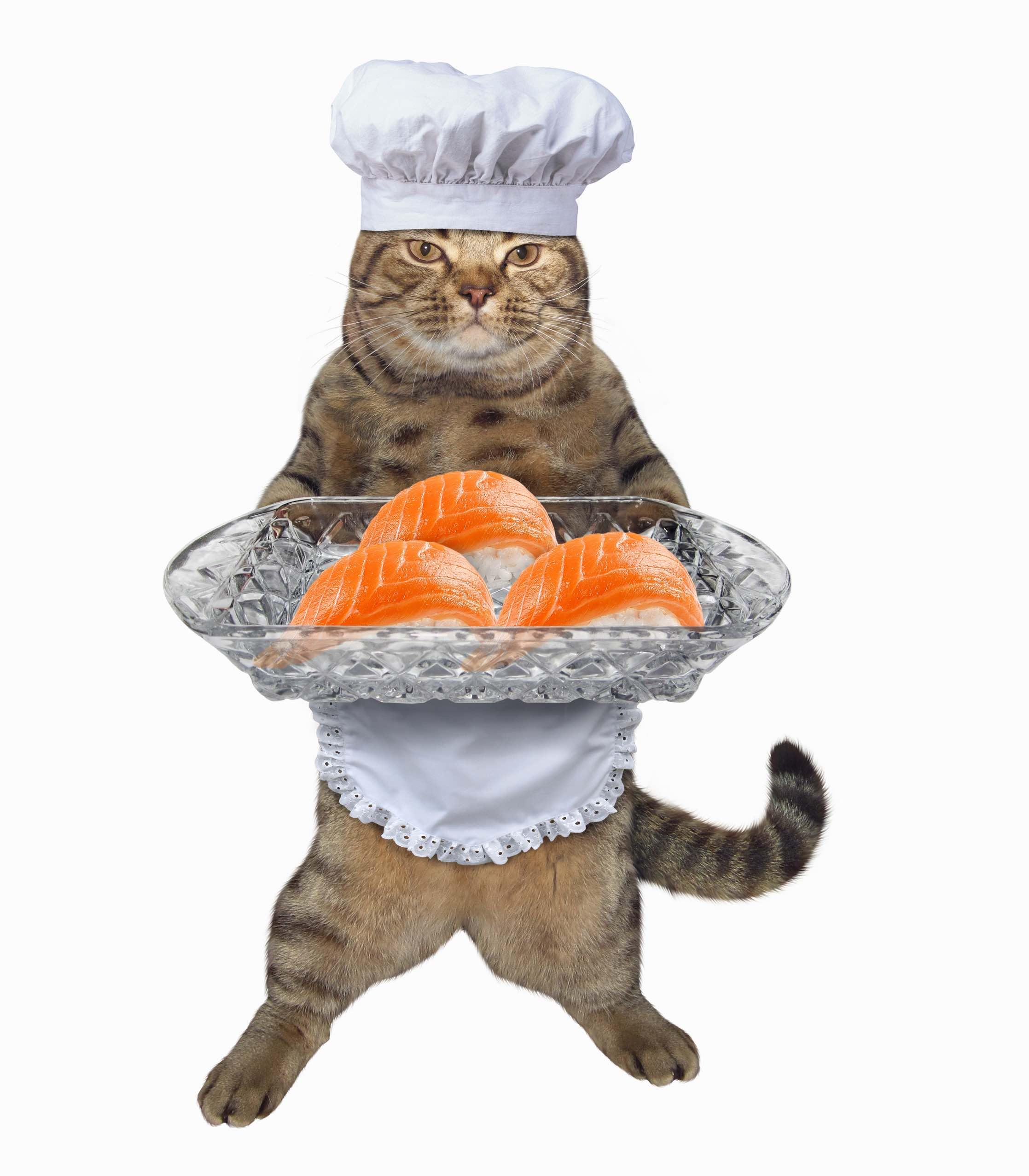 cat foodie cat sushi