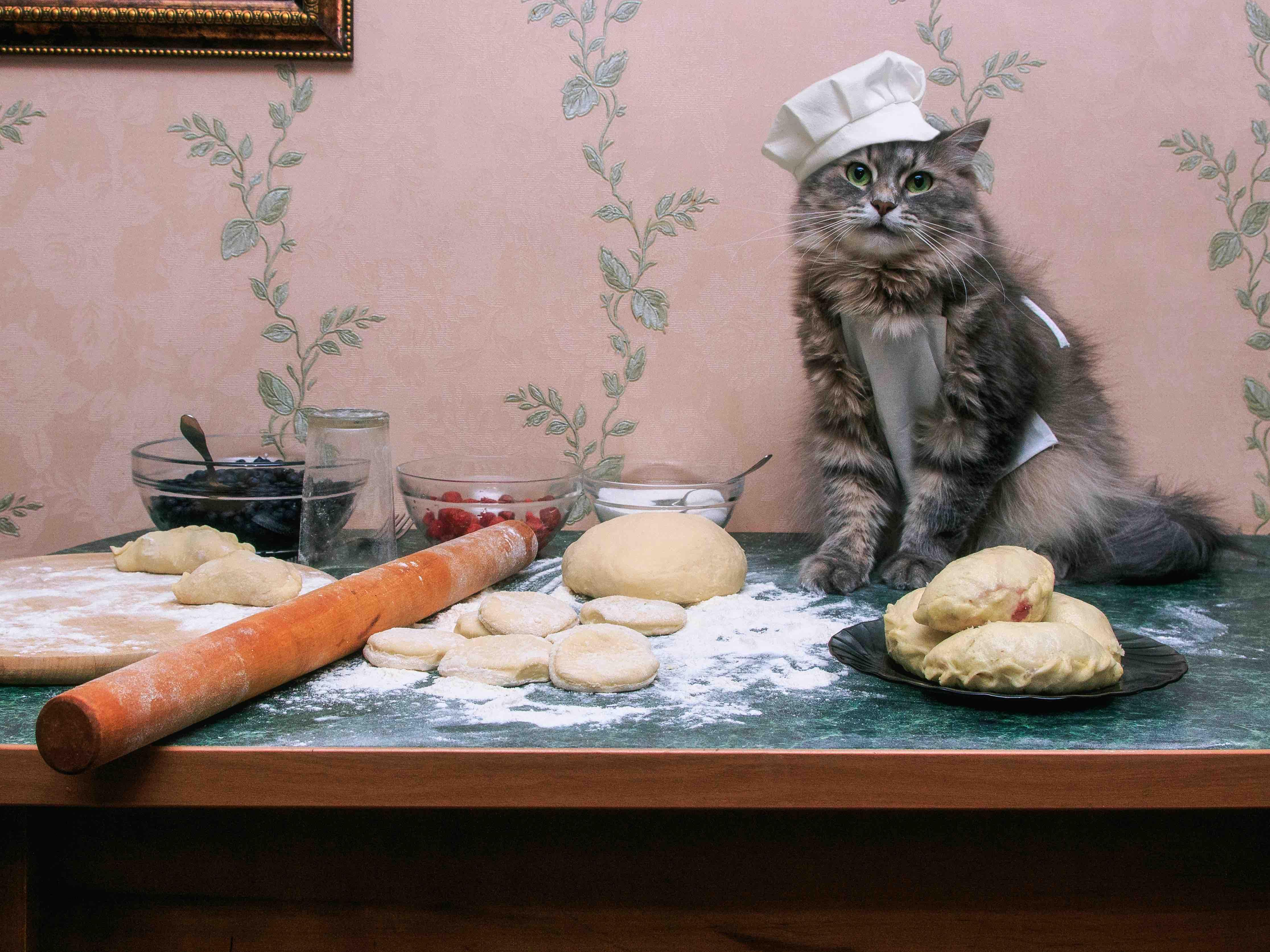 cute baker cat