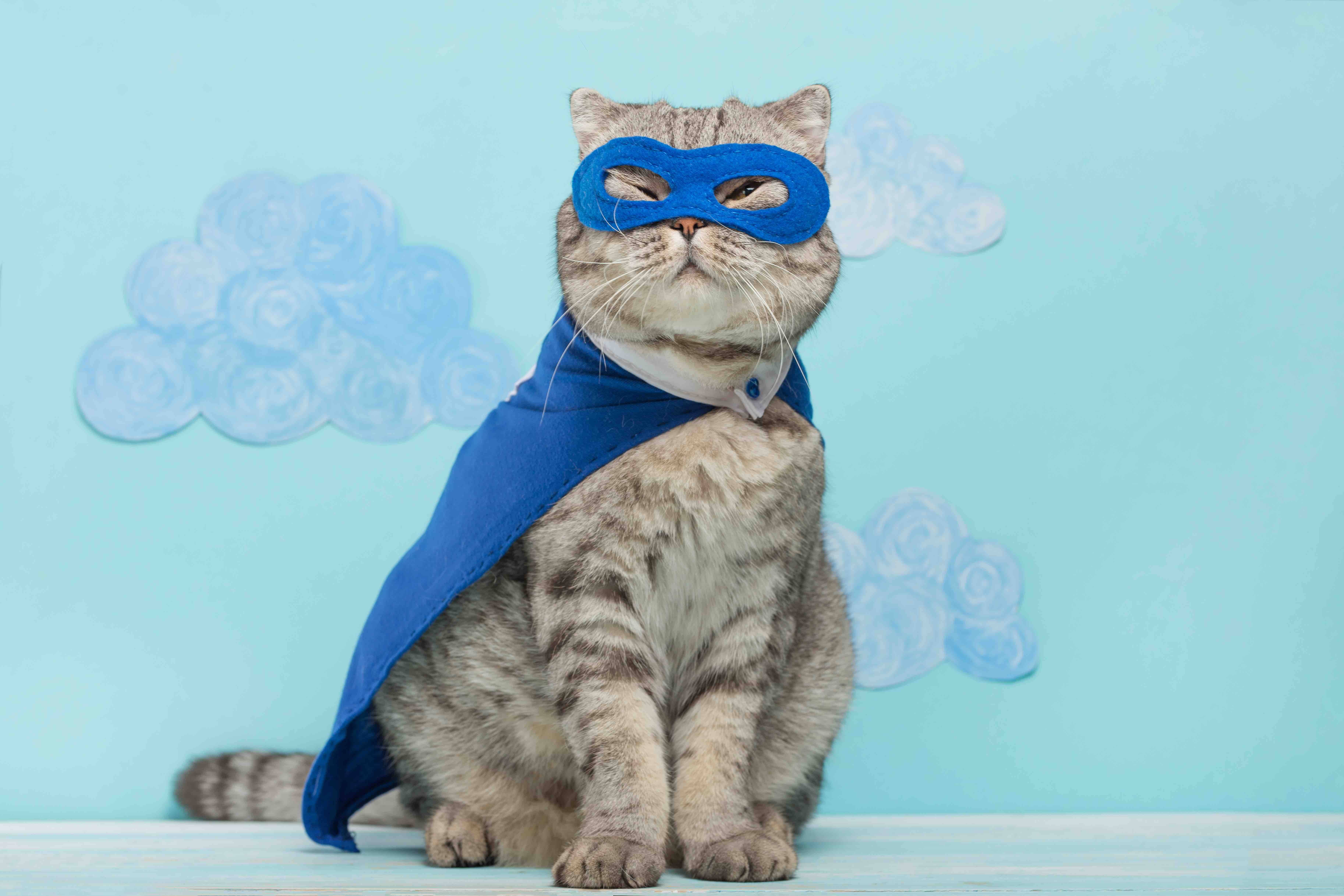 Superhero cat adorable