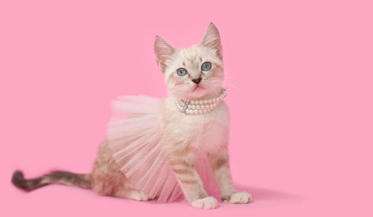 princess diva kitten sassy2