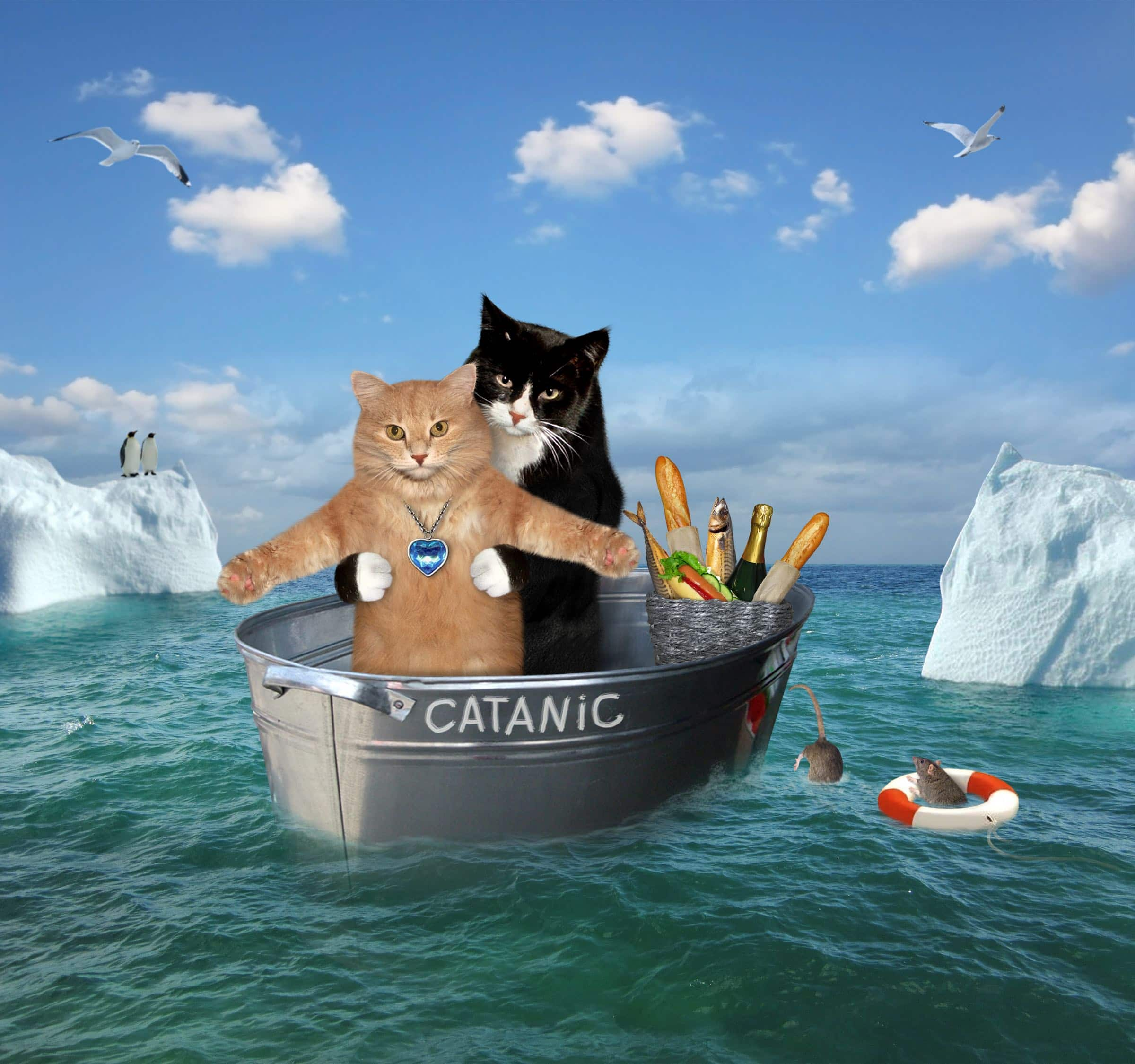 movie cat titanic