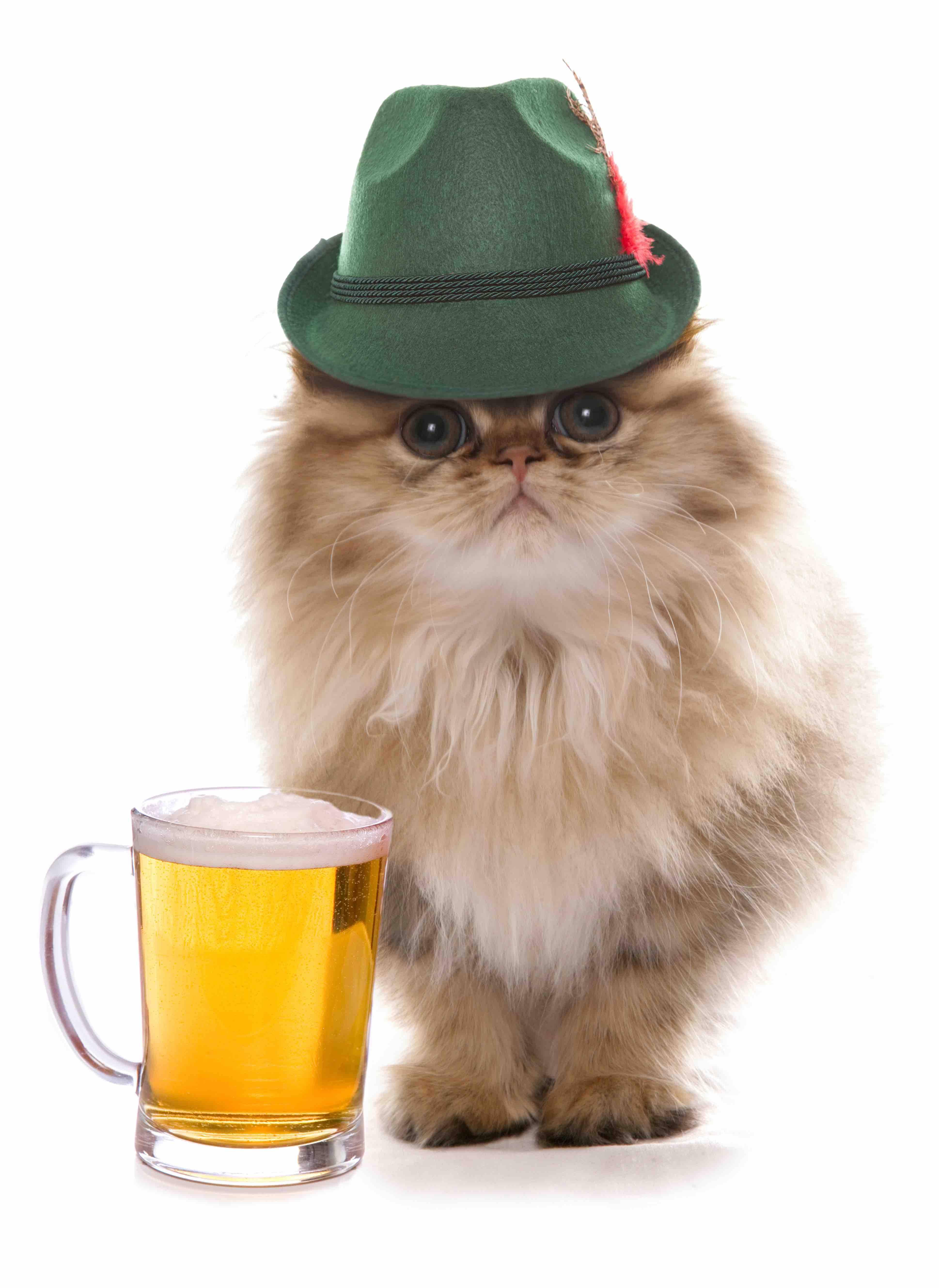 Oktoberfest Cat
