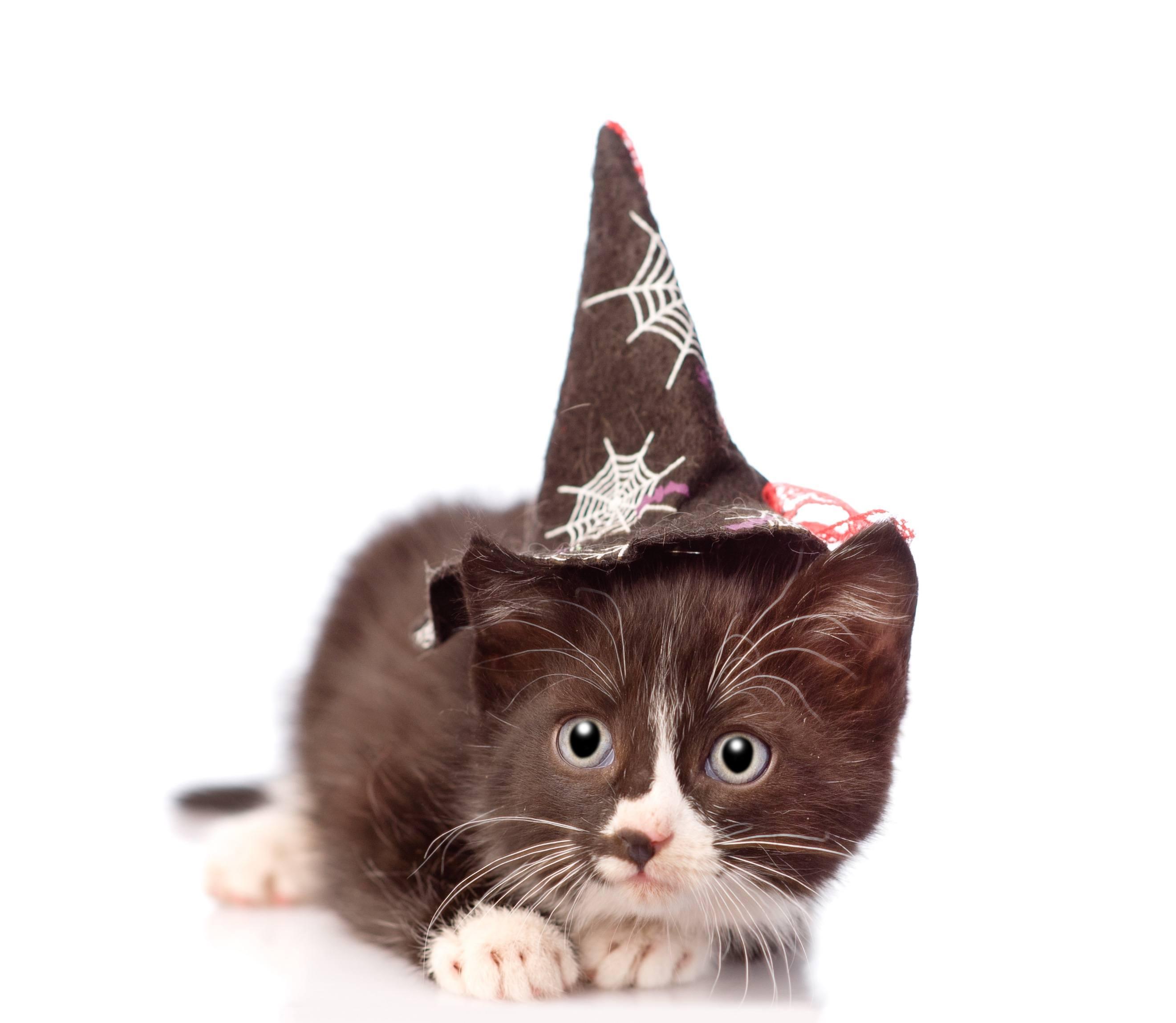witch wizard kitten