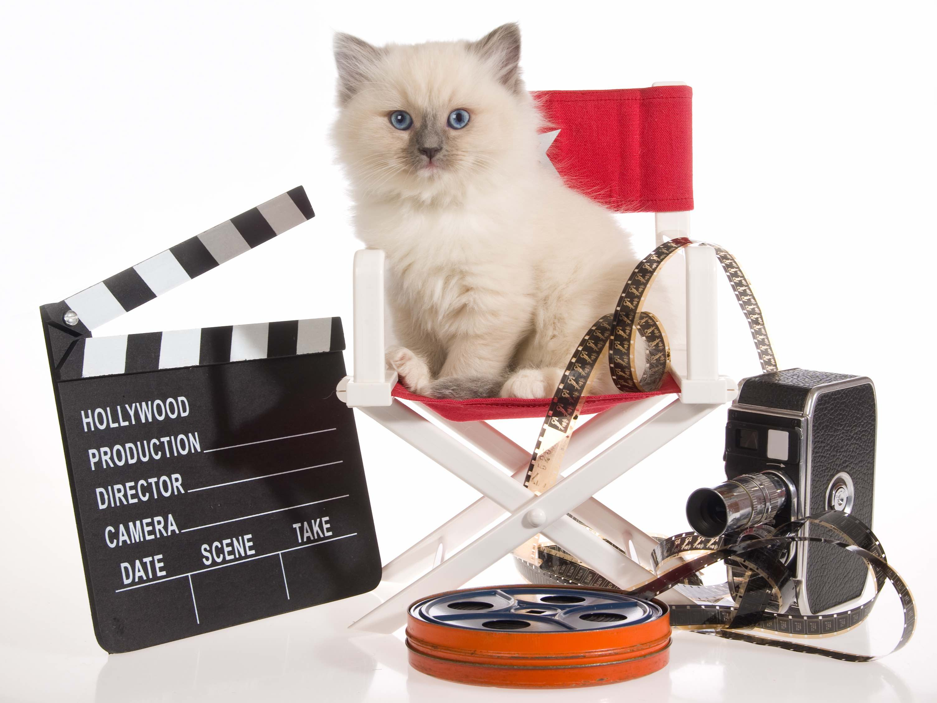 hollywood movie cat