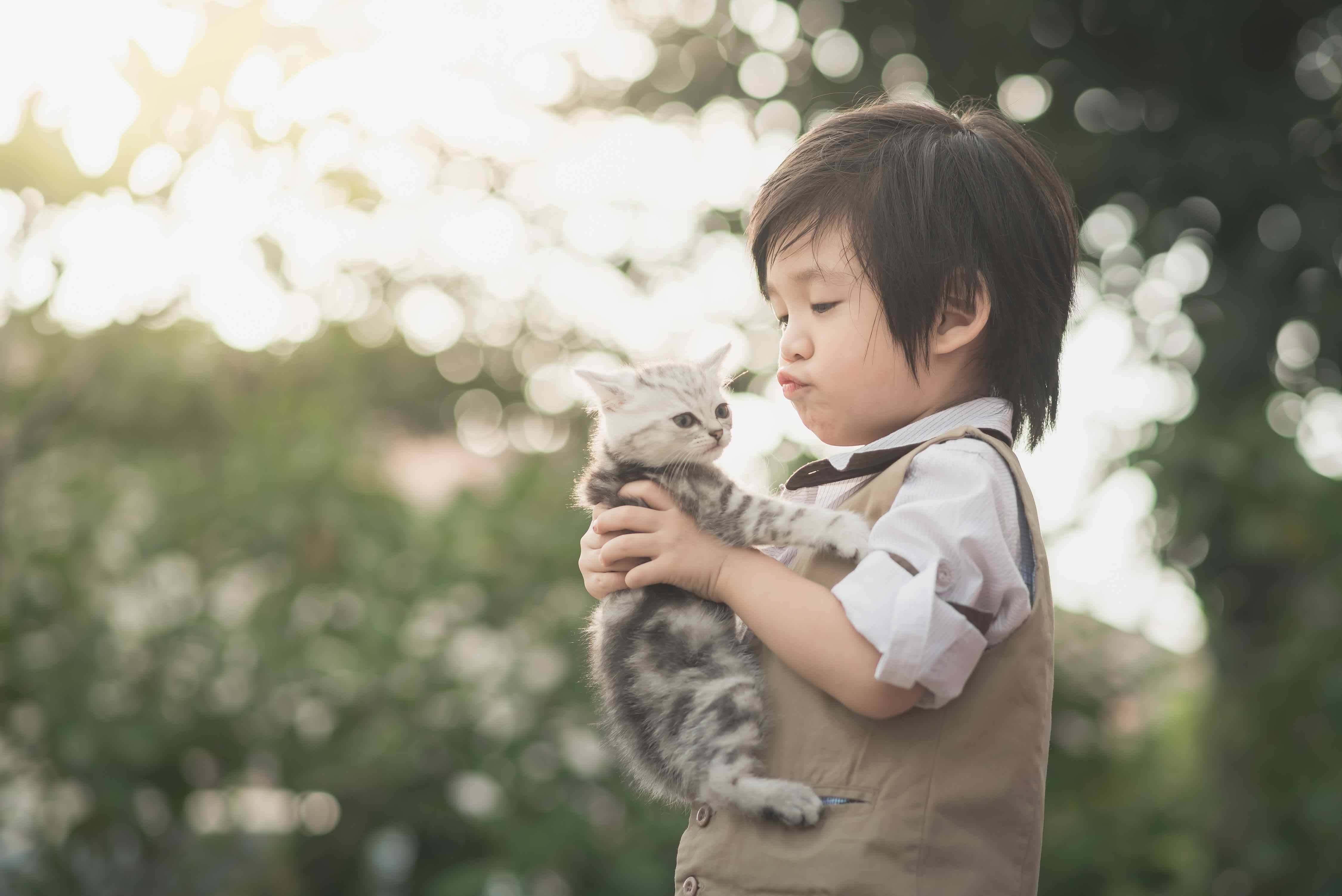 Korean Asian boy with kitten