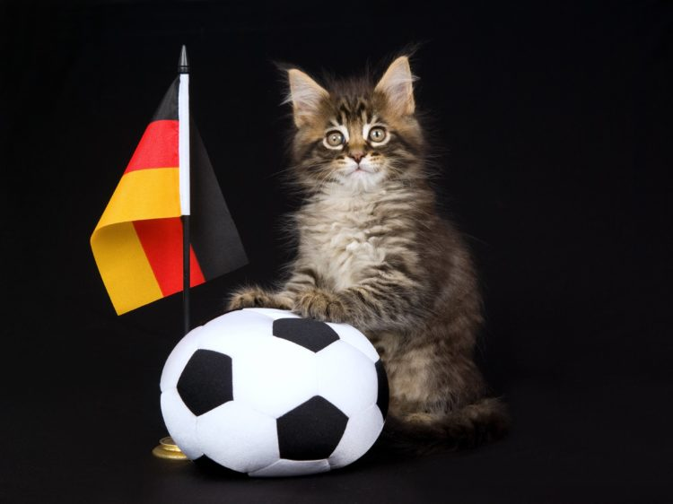 german kitty with flag and soccer ball