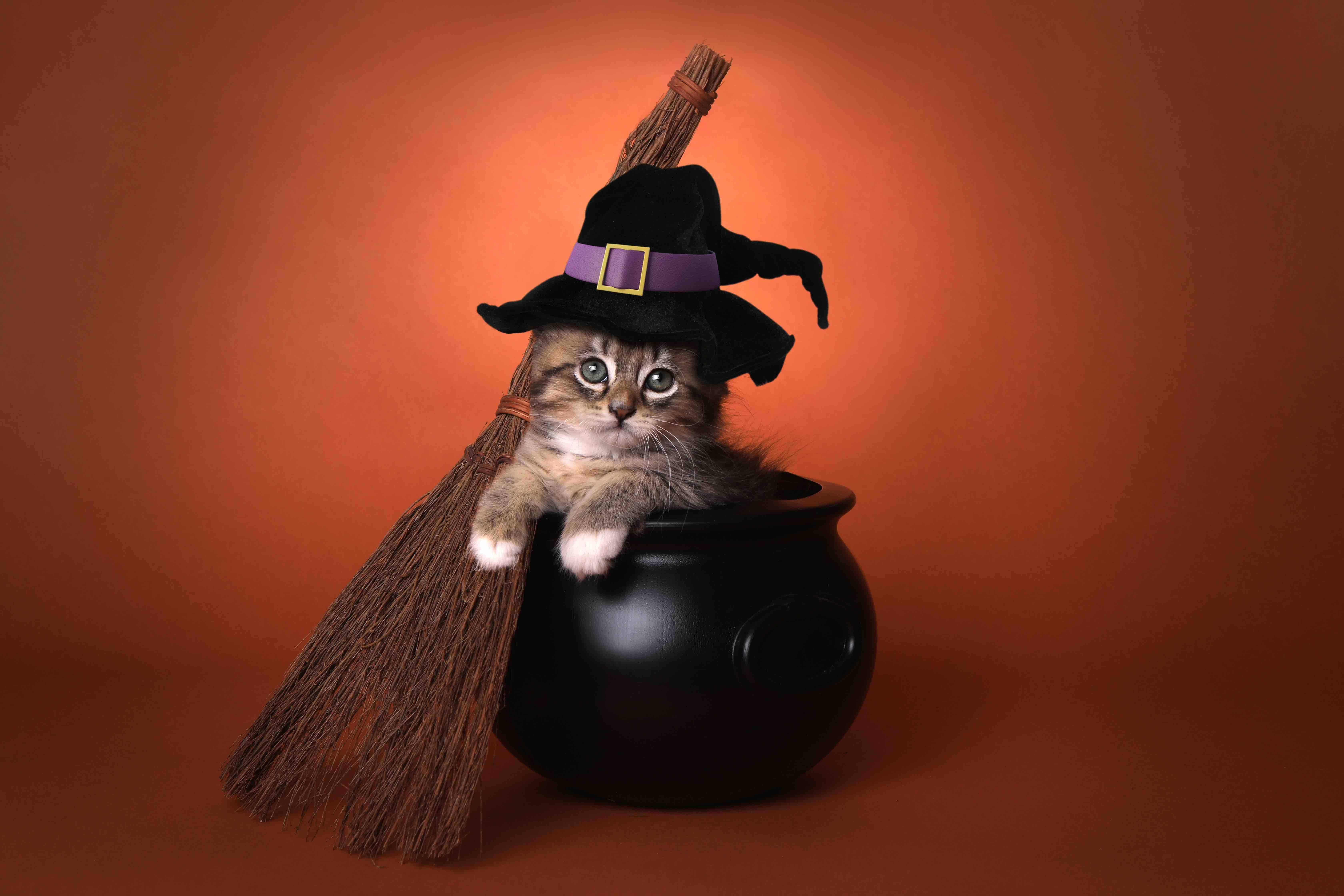 witch cat cauldron