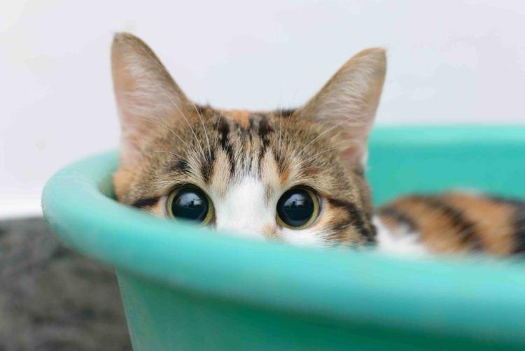 shy cat in bucket