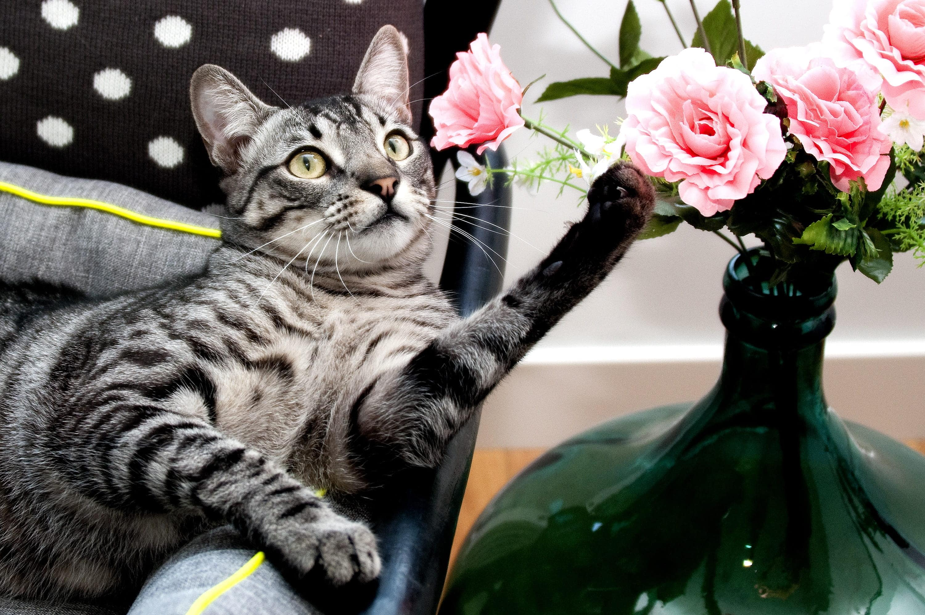 Grey silver tabby cat with flowers