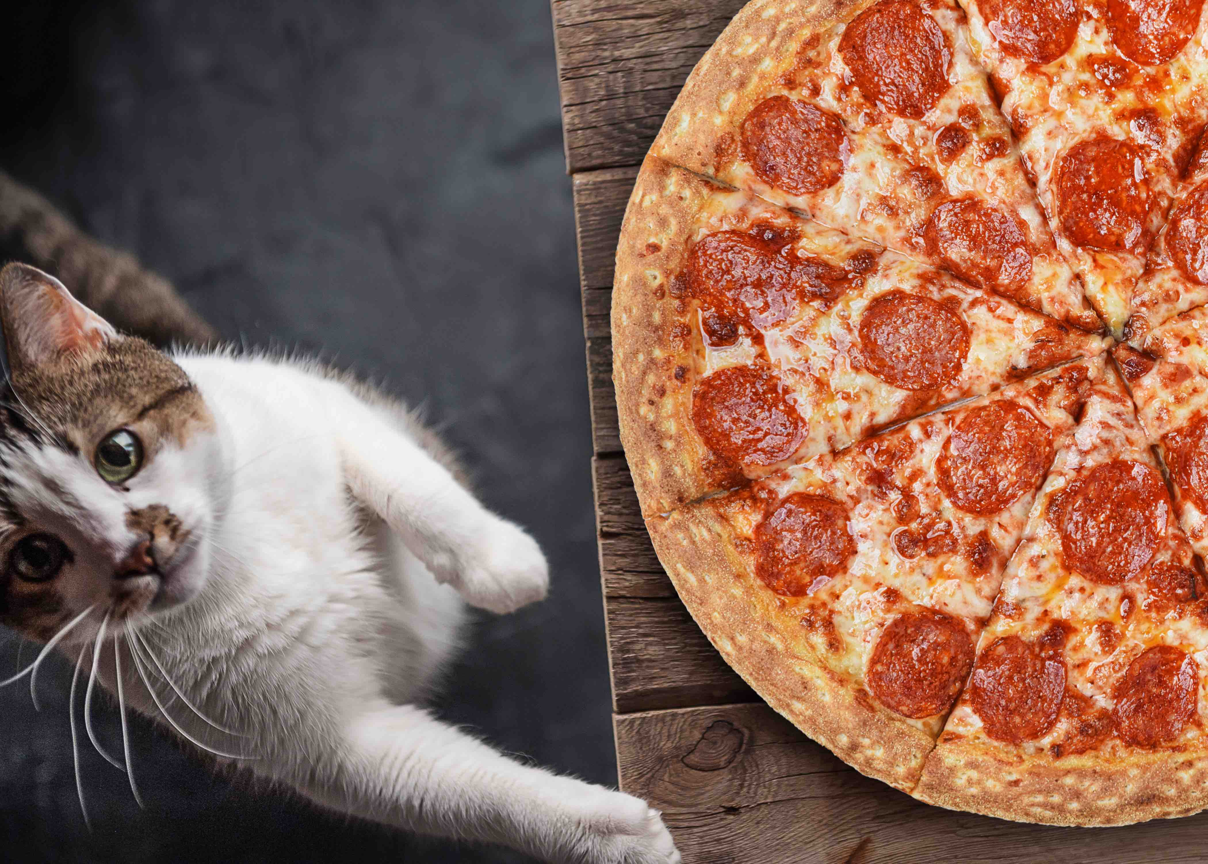 white cat wanting pizza
