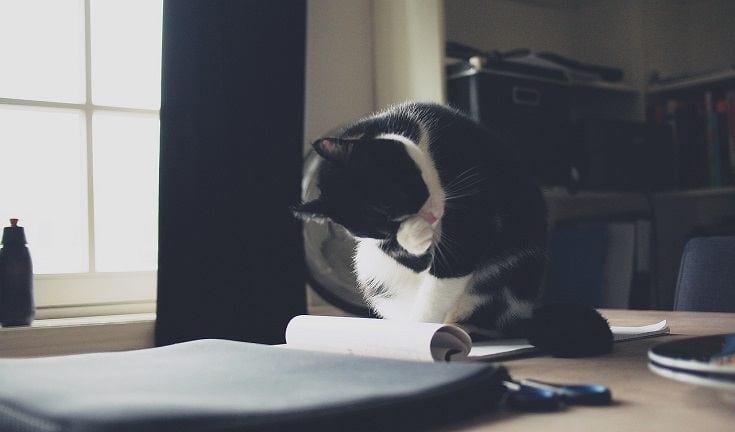 Cat on paper