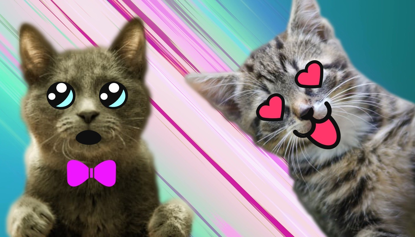 100 Anime Cat Names Ideas For Cool Animated Cats Excited Cats