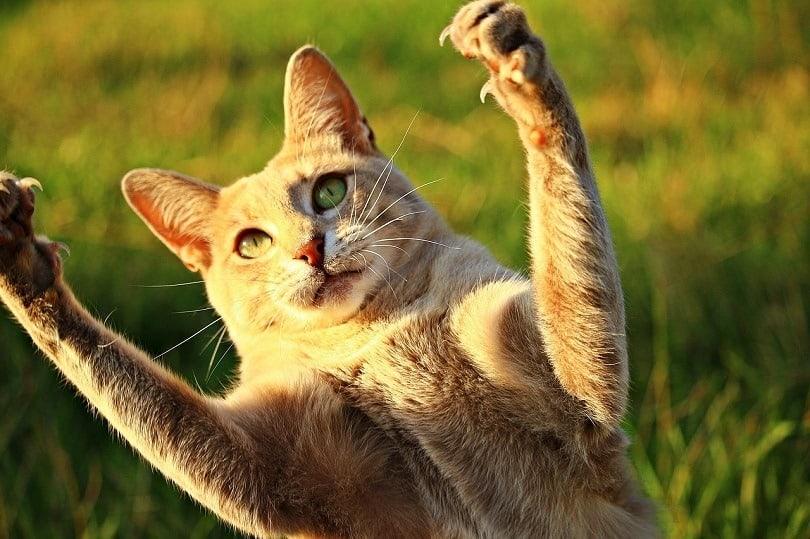 cat hyper
