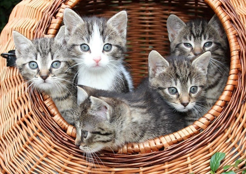 cat litter in a basket
