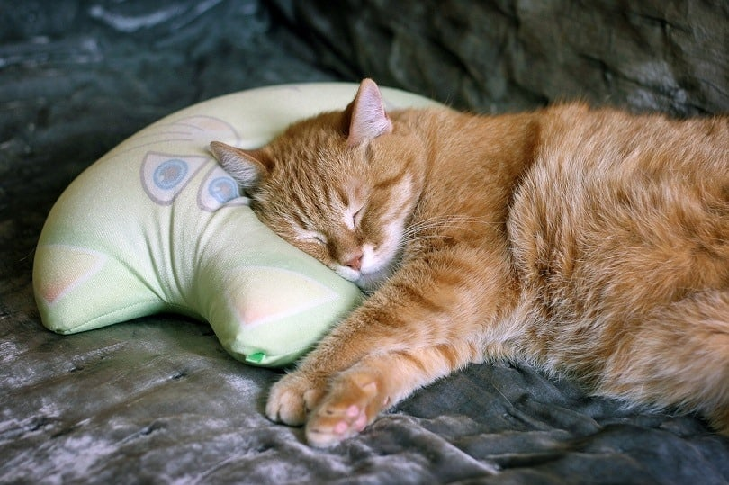 cat neck pillow
