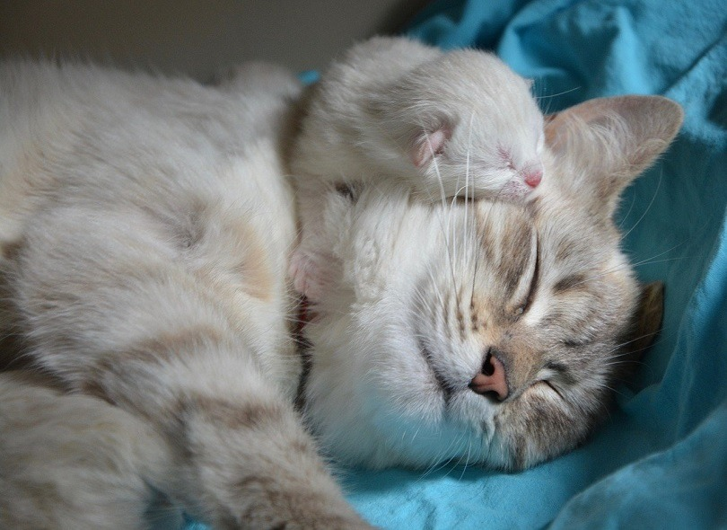 kitten with mom