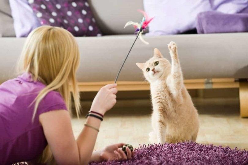 cat playing with owner_Dora Zett, Shutterstock
