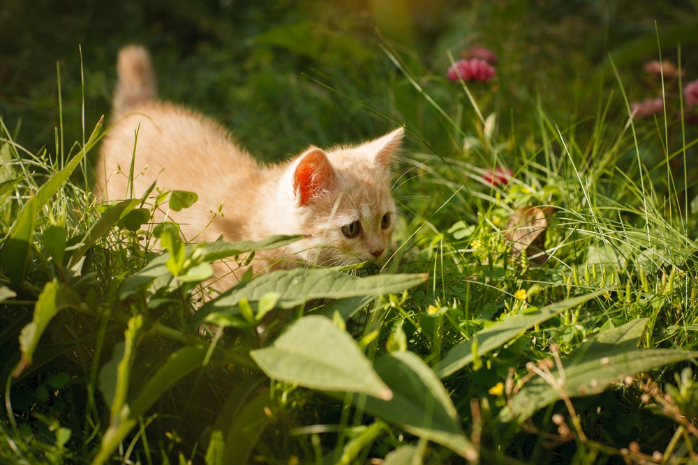 kitten playing on grass