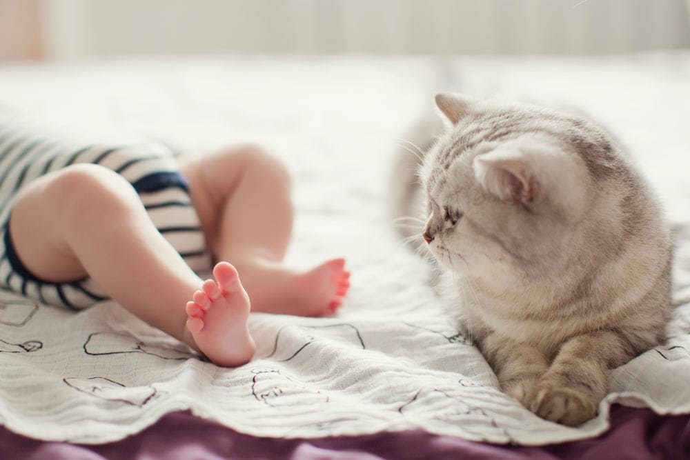 grey cat with baby