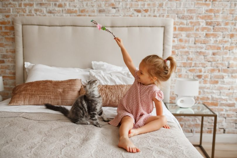 cat playing with little girl