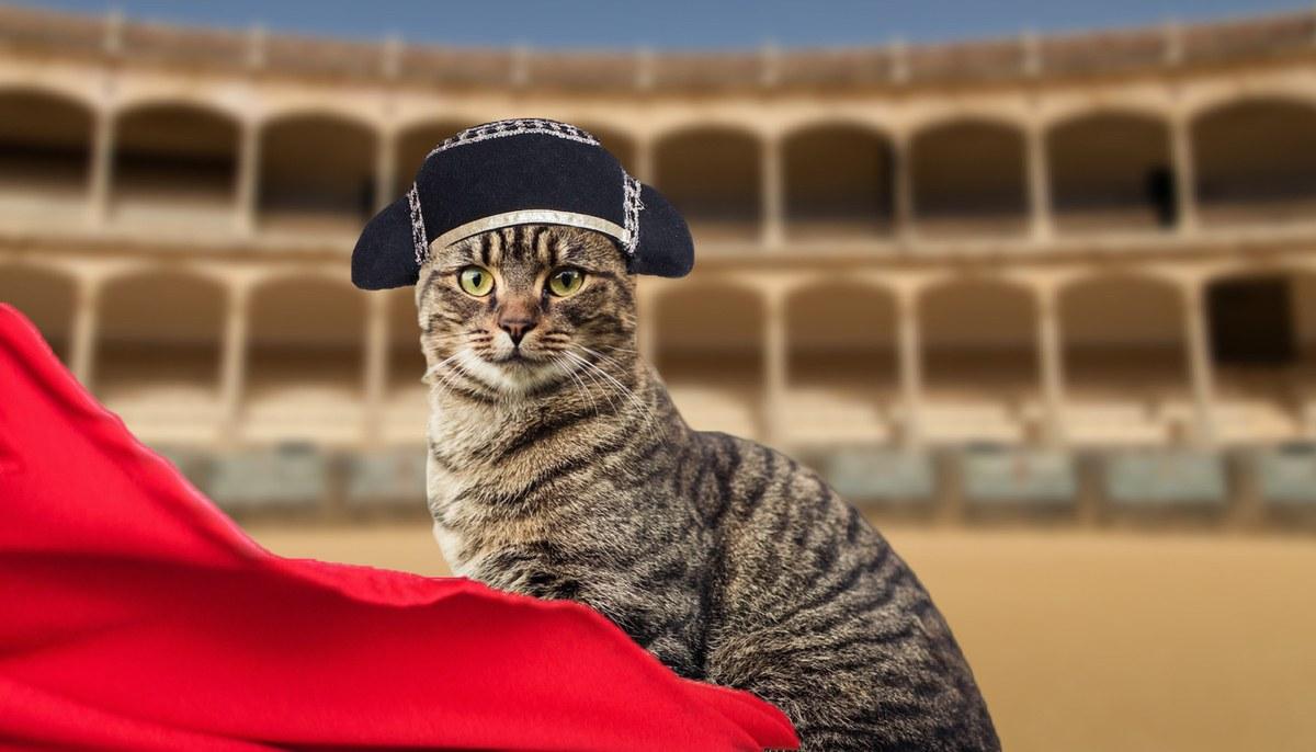 Bull ring cat