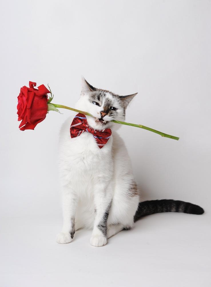 Spanish cat with rose
