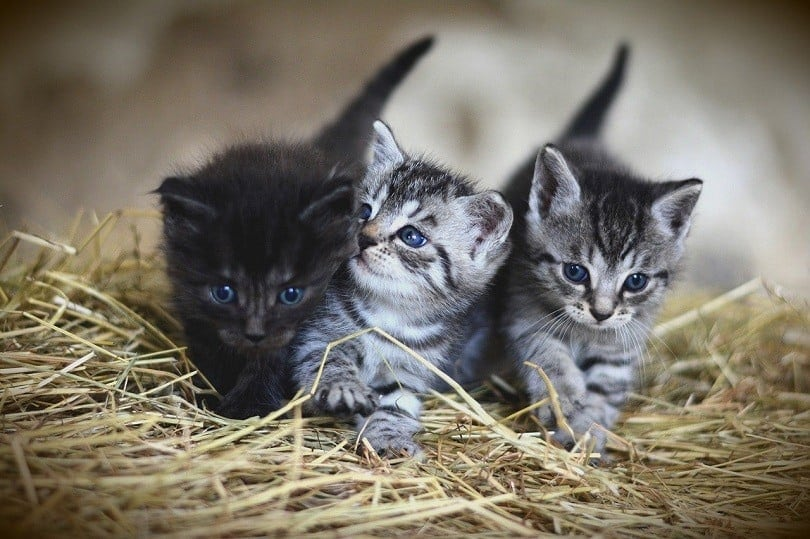 three cat litters