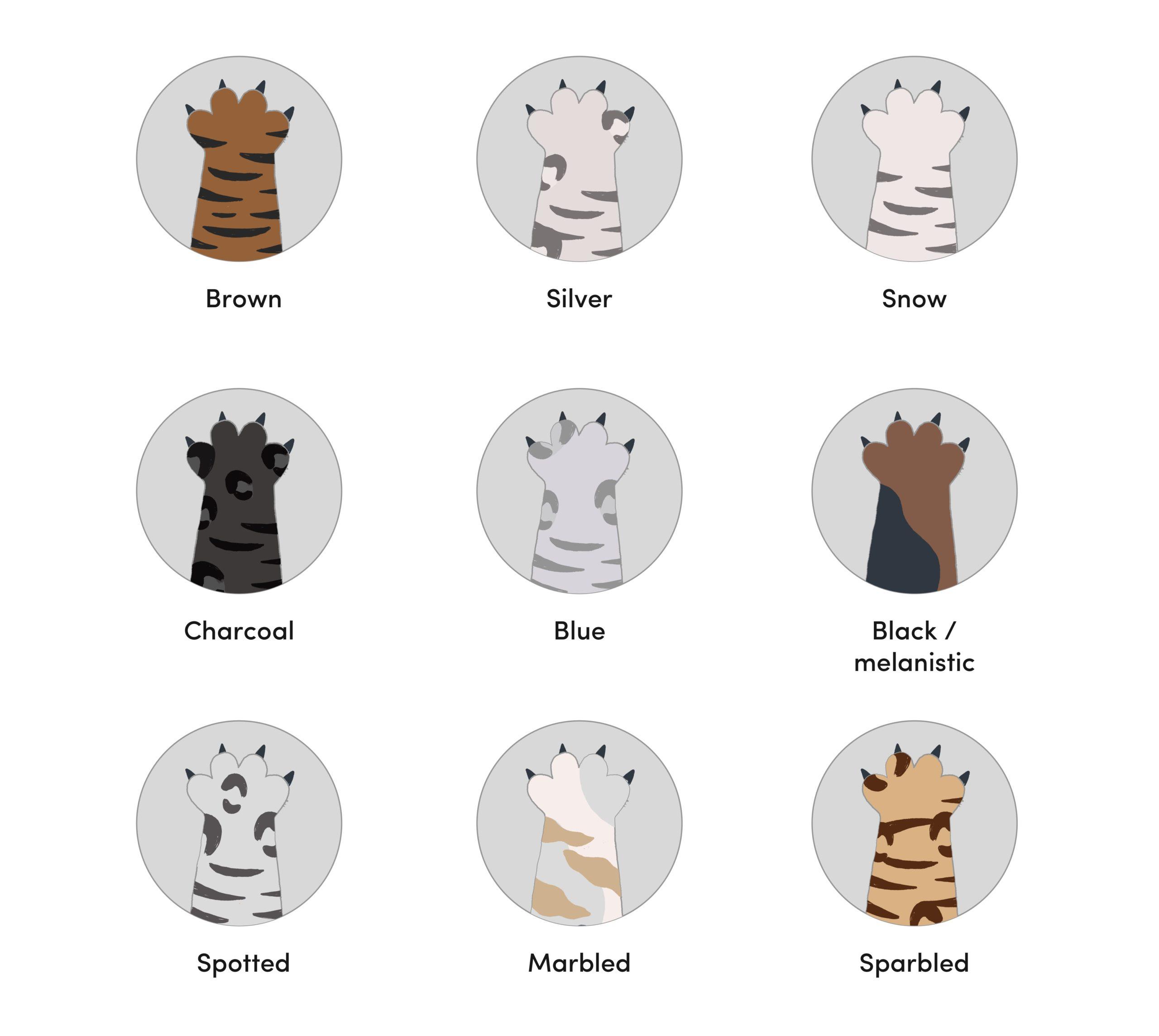 9 Bengal Cat Colors & Patterns