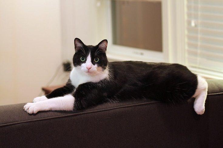Black cat on sofa