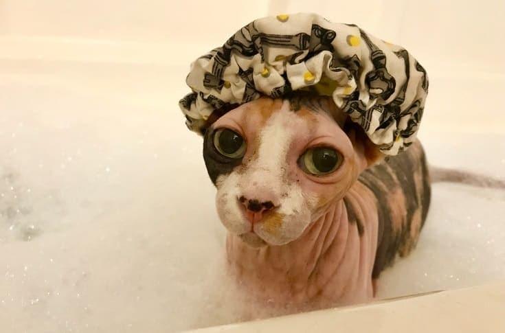 Cat bath time