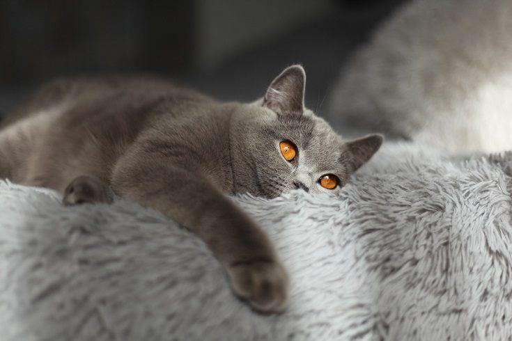 Copper eyes