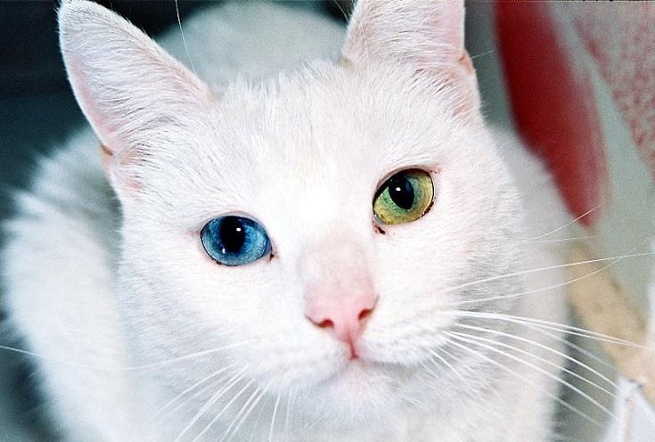 Odd colored eyes