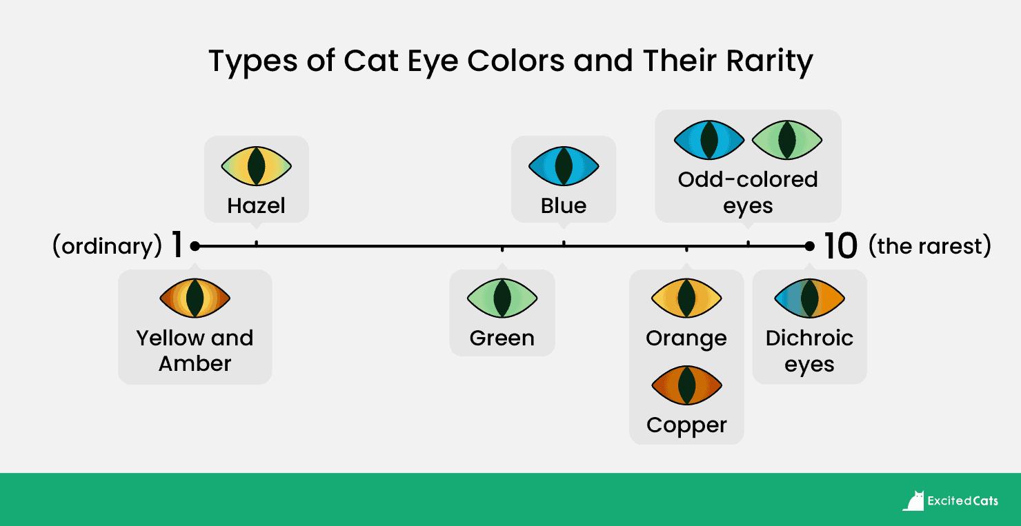 Types_of_Cat_eyes_v2